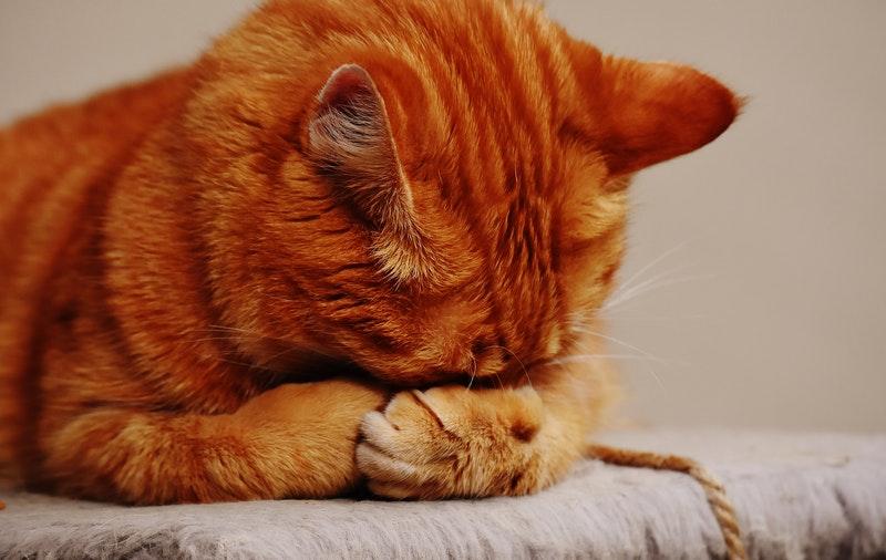 Sudah Tahu Daur Hidup Kucing? Yuk Pelajari Disini