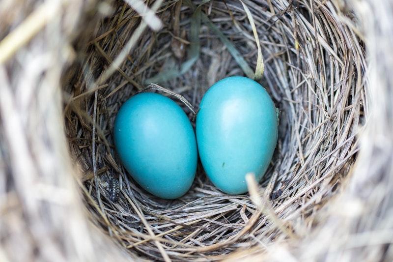 Manfaat Telur Bebek Setengah Matang