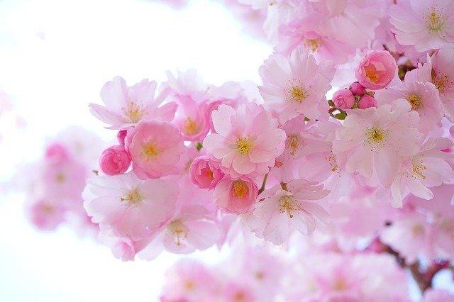Bunga Terunik Di Dunia