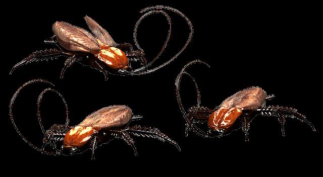Metamorfosis Kecoa: Pengertian dan Prosesnya