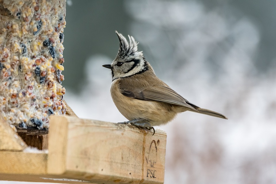 Mengenal Kehebatan Burung Hantu yang Memiliki Tampang Menyeramkan