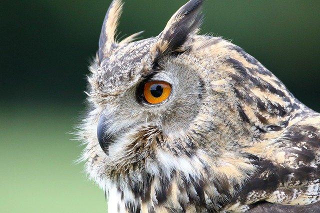 Lindungi Habitat Burung Hantu