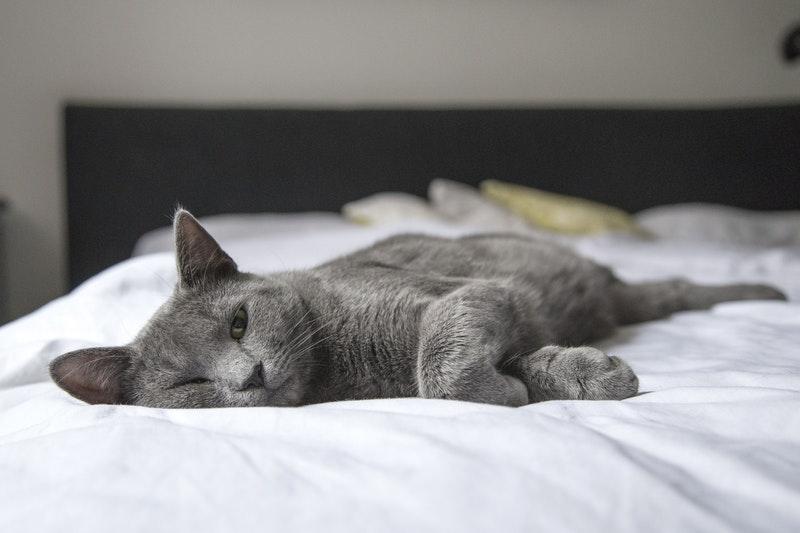 Karakteristik Kucing Stres Pindah Rumah