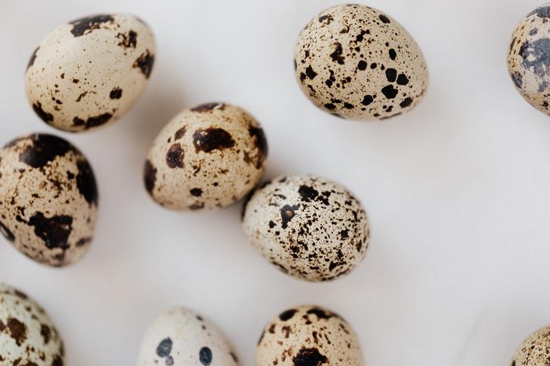 Telur Puyuh Sumber Protein yang Baik, Namun Bolehkan Telur Puyuh Untuk Bayi 7 Bulan, Ini Dia Penjelasanya